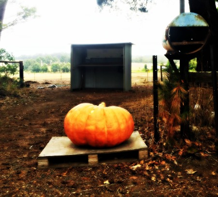 Pemby pumpkin